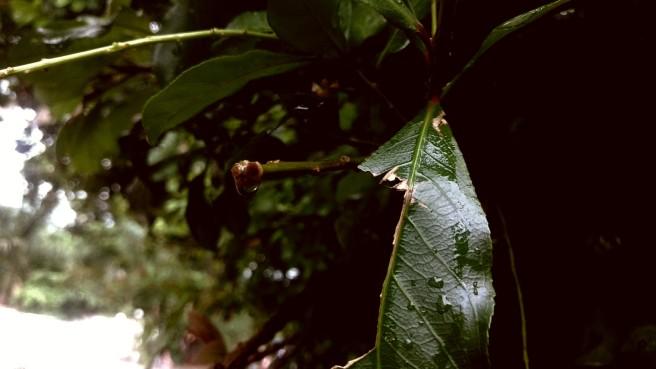 PicsArt_06-11-12.05.38