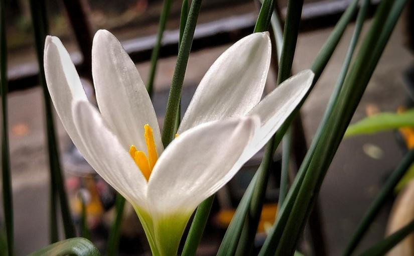 Tiny flower in the grass • मी फूल तृणातीलइवले..